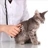 Ветеринарные клиники в Армизонском